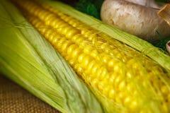 Vida amarilla madura del maíz y todavía del primer de las setas Fotos de archivo libres de regalías