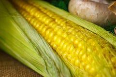 Vida amarilla madura del maíz y todavía del primer de las setas Imagen de archivo libre de regalías