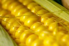 Vida amarilla madura del maíz y todavía del primer de las setas Foto de archivo