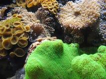 Vida aquática Fotografia de Stock Royalty Free