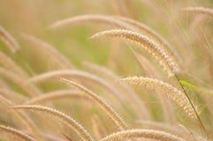 vida bonita do neture da luz da flor Imagem de Stock Royalty Free