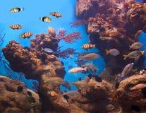 Vida colorida y vibrante del acuario Foto de archivo