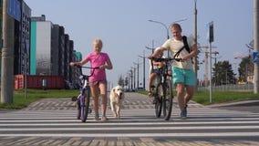 Vida con los animales domésticos en la ciudad moderna - familia con las bicis y un perro grande que cruza el camino almacen de video