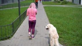 Vida con los animales domésticos en una ciudad moderna - la muchacha camina con un perro alrededor de la ciudad metrajes