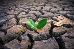 Vida con sequía del árbol fotos de archivo libres de regalías