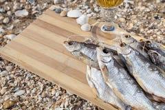 Vida culinaria de la cerveza marina aún Imagen de archivo