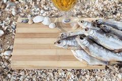 Vida culinaria de la cerveza marina aún Fotos de archivo