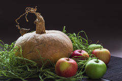 Vida da abóbora e das maçãs ainda Fotografia de Stock Royalty Free
