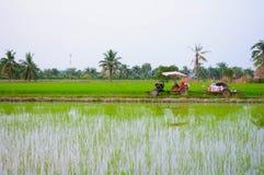 Vida da agricultura Fotos de Stock