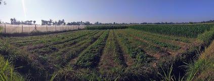 Vida da exploração agrícola foto de stock