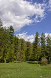 Vida da floresta Imagens de Stock Royalty Free