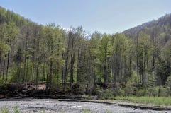 Vida da floresta Imagens de Stock