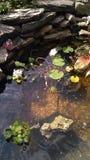 Vida da lagoa foto de stock