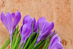 A vida da Páscoa ainda floresce o açafrão Foto de Stock Royalty Free