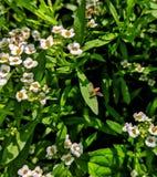 Vida das abelhas pequenas imagem de stock