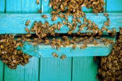 Vida de abejas Abejas de trabajador Las abejas traen la miel Foto de archivo