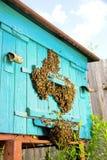 Vida de abejas Abejas de trabajador Las abejas traen la miel Imágenes de archivo libres de regalías