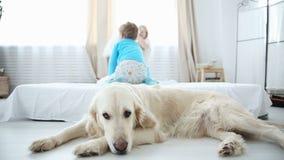 Vida de animales domésticos nacionales en la familia el golden retriever está descansando sobre el piso los niños en el fondo que almacen de metraje de vídeo