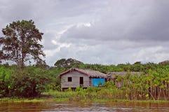 Vida de cada día en la selva tropical Foto de archivo libre de regalías