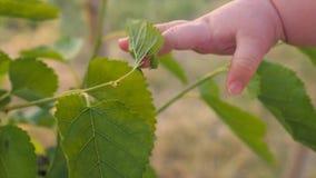 Vida de Eco Alimento biológico Vida rústica Fundo da agricultura Mão do ` s da criança filme