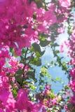 Vida de vida en la floración fotografía de archivo libre de regalías