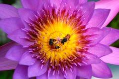Vida de la abeja Fotografía de archivo