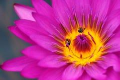 Vida de la abeja Fotos de archivo libres de regalías