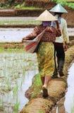Vida de la agricultura Imagen de archivo libre de regalías