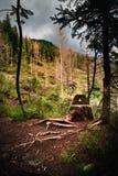 Vida de la calma del bosque con un tocón como taburete foto de archivo libre de regalías