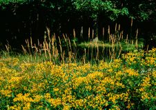 Vida de la calma del bosque en el verano fotos de archivo