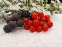 Vida de la calma del invierno de las uvas negras y de las bayas rojas del viburnum fotografía de archivo