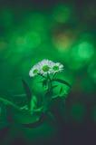Vida de la flor Imágenes de archivo libres de regalías