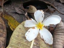 Vida de la flor Imagen de archivo