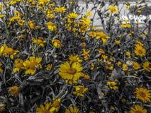 Vida de la fotografía de la flor del viaje foto de archivo libre de regalías