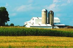 Vida de la granja Foto de archivo libre de regalías
