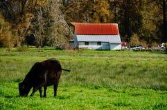 Vida de la granja Fotos de archivo