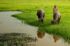 Vida de la granja - forma de vida simple - Camboya Imagen de archivo libre de regalías