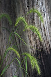 Vida de la hierba y todavía del árbol Fotos de archivo
