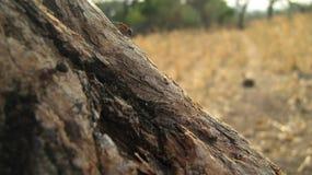 Vida de la hormiga Imagen de archivo