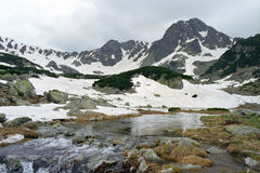 Vida de la montaña Foto de archivo