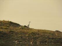 Vida de la orilla del lago Phewa Fotografía de archivo libre de regalías