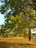 Vida de la pequeña ciudad - árboles que alinean una carretera nacional Fotografía de archivo