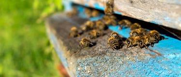 Vida de las abejas de trabajador Las abejas traen la miel Imagen de archivo