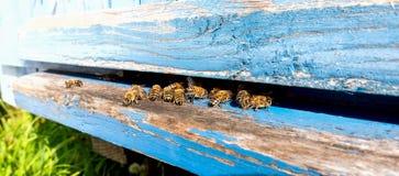 Vida de las abejas de trabajador Las abejas traen la miel Imágenes de archivo libres de regalías