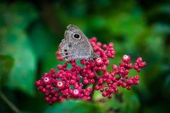 vida de las mariposas Imágenes de archivo libres de regalías