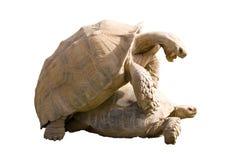 Vida de las tortugas Imagen de archivo