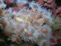 Vida de mar Fotos de archivo