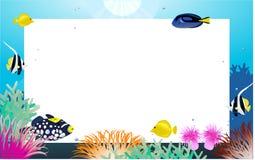 Vida de mar Foto de Stock Royalty Free