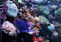Vida de mar Fotografia de Stock Royalty Free