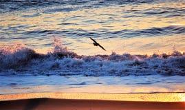 Vida de mar imagen de archivo libre de regalías